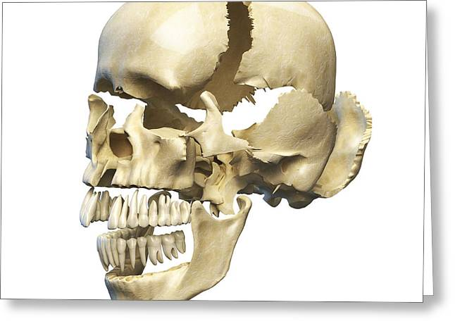 Perspective View Of Human Skull Greeting Card