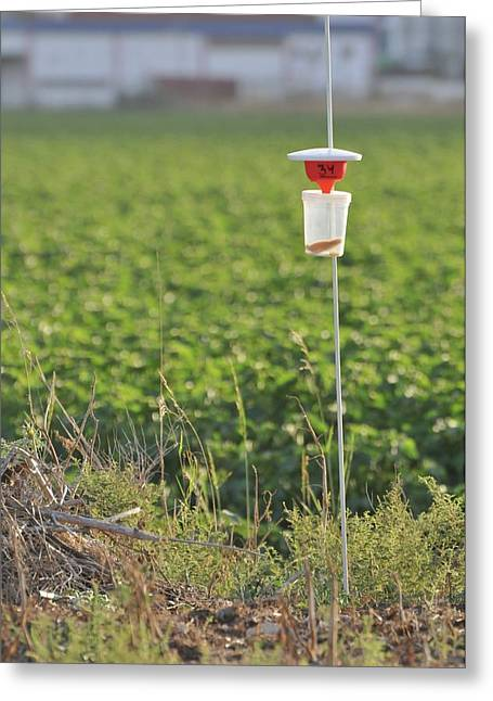 Pest Trap In An Agricultural Field. Greeting Card by Photostock-israel
