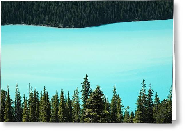 Peyto Lake. Banff National Park In Alberta. Greeting Card
