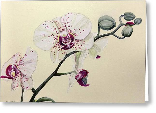 Phalaenopsis Black Panther Orchid Greeting Card