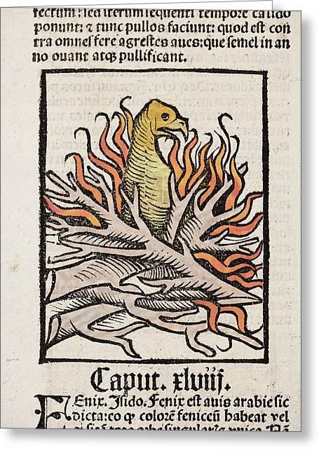 Phoenix Greeting Card by Paul D Stewart