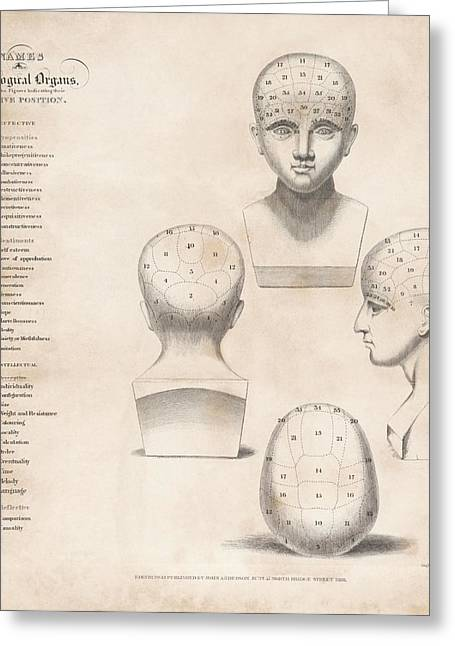 Phrenology Head Regions Greeting Card by King's College London