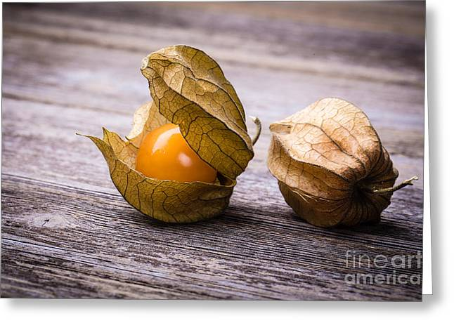 Physalis  Greeting Card by Jane Rix