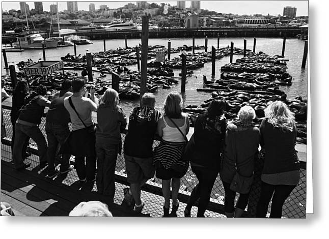 Pier 39 San Francisco Bay Greeting Card