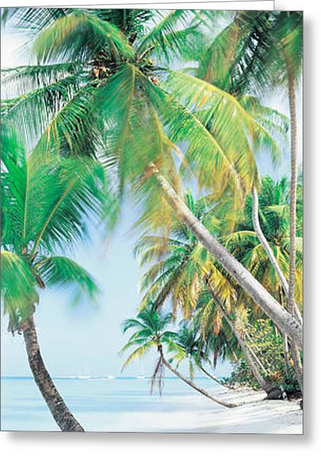 Pigeon Point Tobago Greeting Card by Panoramic Images