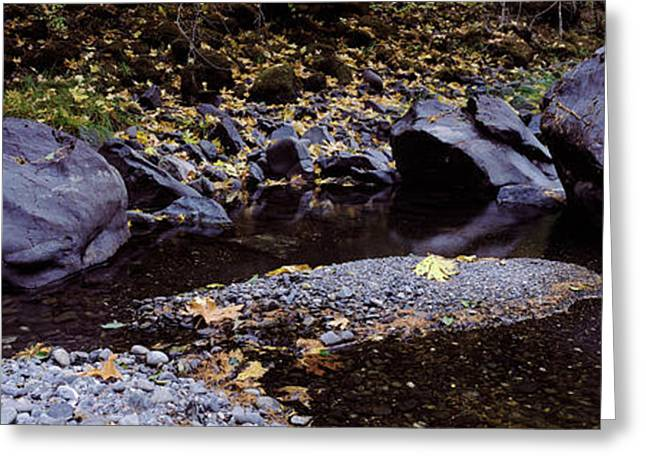 Pilot Creek In Autumn, Humboldt County Greeting Card