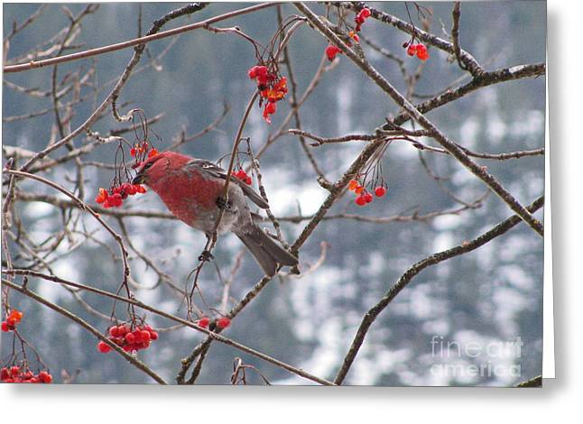 Pine Grosbeak And Mountain Ash Greeting Card by Leone Lund