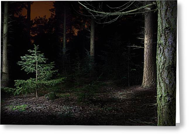 Pine Trees New Life Greeting Card by Dirk Ercken