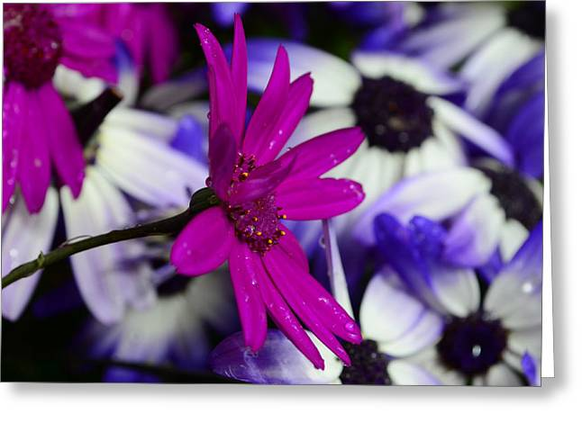 Pink Flower Greeting Card by Barbara Walsh