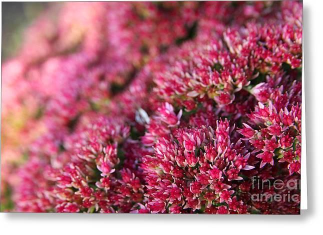 Pink Flower Bouquet Greeting Card by Jolanta Meskauskiene