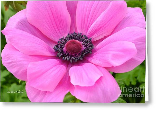 Greeting Card featuring the photograph Pink Flower by Jeannie Rhode