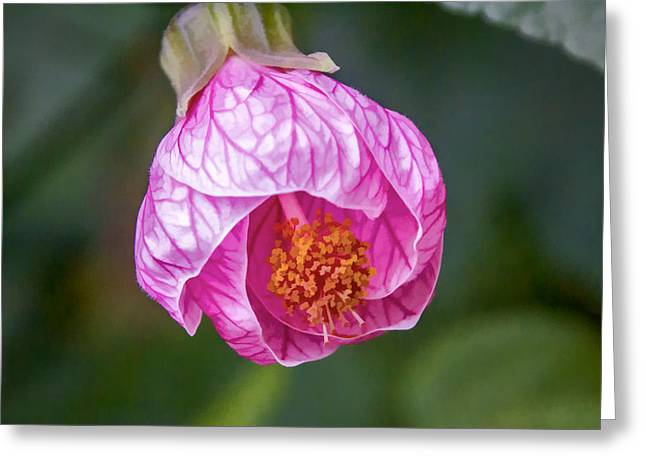 Greeting Card featuring the digital art Pink Hibiscus by Photographic Art by Russel Ray Photos