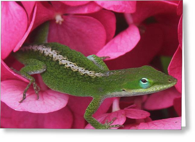Pink Hydrangea And Lizard 2 Greeting Card by Cathy Lindsey