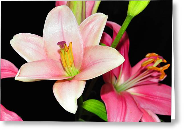 Greeting Card featuring the photograph Pink Lilies by Lula Adams