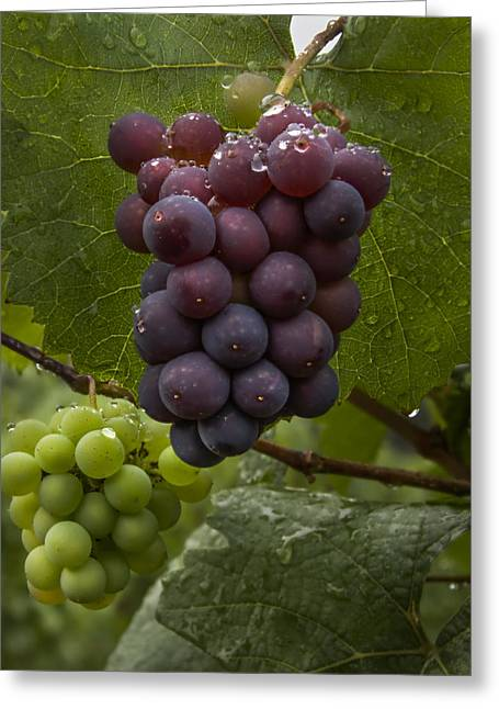 Pinot Noir Grapes Greeting Card by Jean Noren