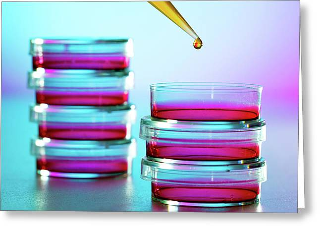 Pipette Dropping Liquid Into Petri Dish Greeting Card by Wladimir Bulgar