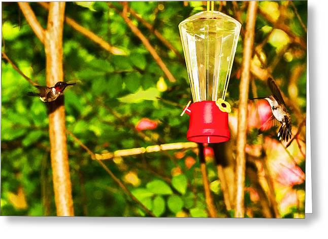 Hummingbirds - In Flight - Pit Stop Greeting Card by Barry Jones