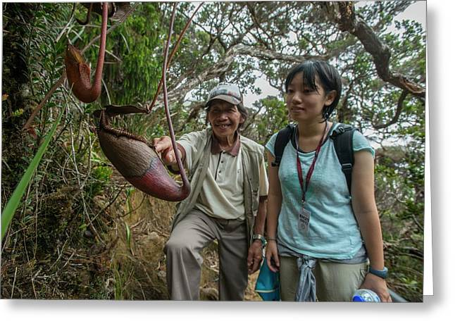 Pitcher Plant Growing In Kinabalu Np Greeting Card by Scubazoo