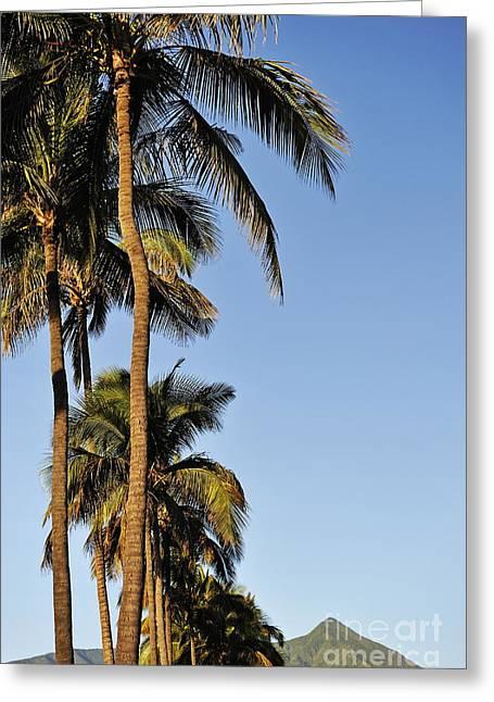 Plam Trees At Sunrise Greeting Card by Sami Sarkis