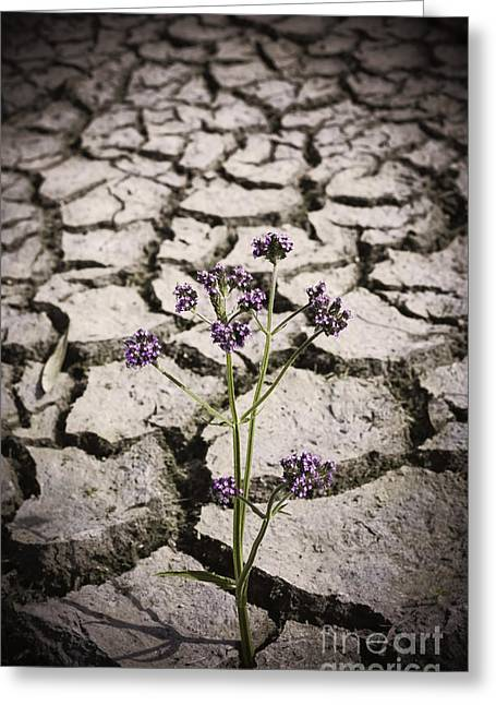 Plant Growing Through Dirt Crack During Drought   Greeting Card