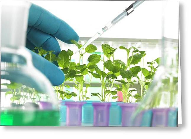Plant Research Greeting Card