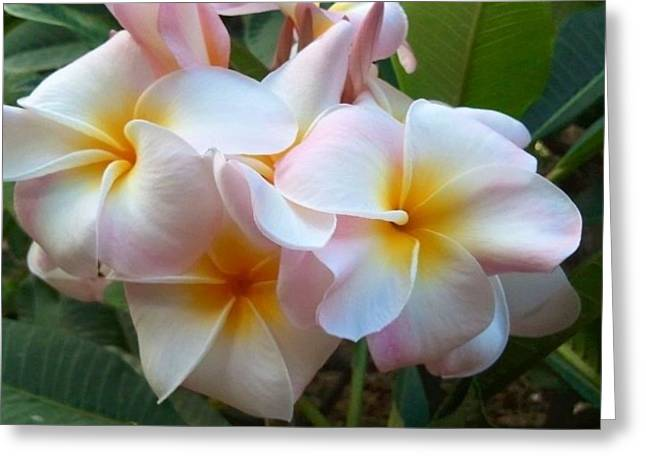 Plumeria Cluster Greeting Card by Blondie Wagner