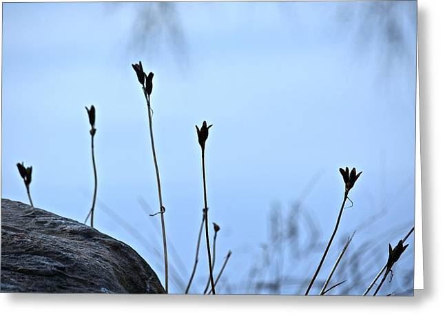 Pods On Pond Greeting Card