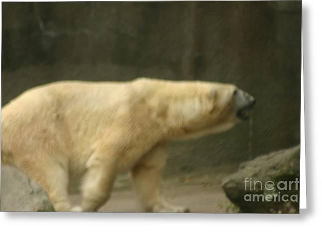 Polar Bear Greeting Card by Eric Brock