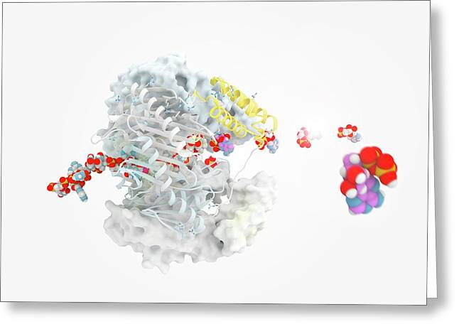 Polynucleotide Phosphorylase Molecule Greeting Card by Ramon Andrade 3dciencia