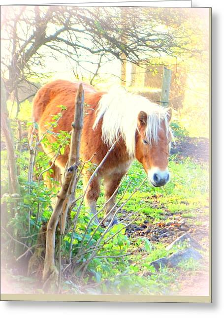 The Happy Go Lucky Pony Life Greeting Card by Hilde Widerberg