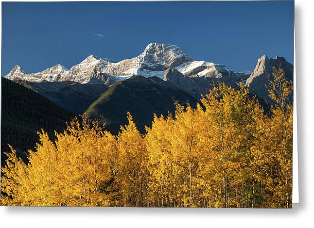 Poplar Trees In Autumn, Mount Lougheed Greeting Card by Panoramic Images