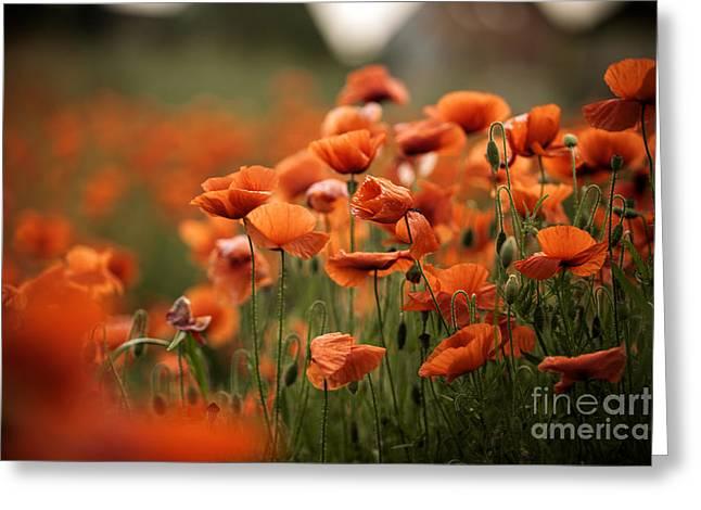 Poppy Dream Greeting Card by Nailia Schwarz