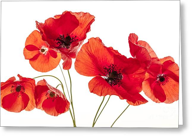 Poppy Flowers On White Greeting Card by Elena Elisseeva