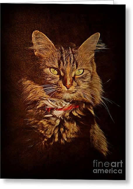 Portrait Of A Tramp Cat Greeting Card