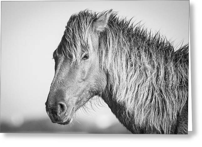 Portrait Of A Wild Horse Greeting Card