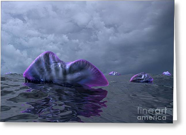 Portuguese Men-of-war, Artwork Greeting Card by Walter Myers