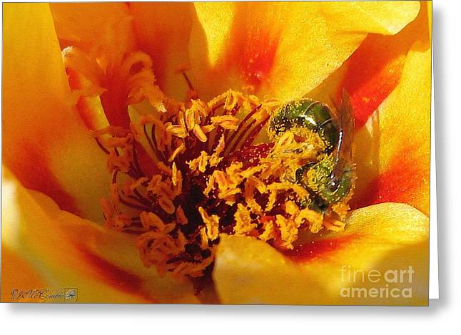 Portulaca In Orange Fading To Yellow Greeting Card by J McCombie