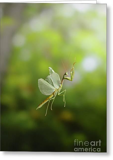 Praying Mantis In Flight Greeting Card