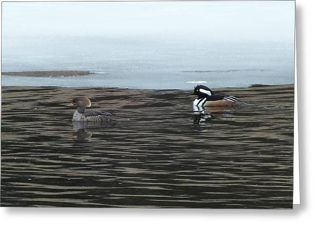 Greeting Card featuring the photograph Pretty Ducks by Gene Cyr