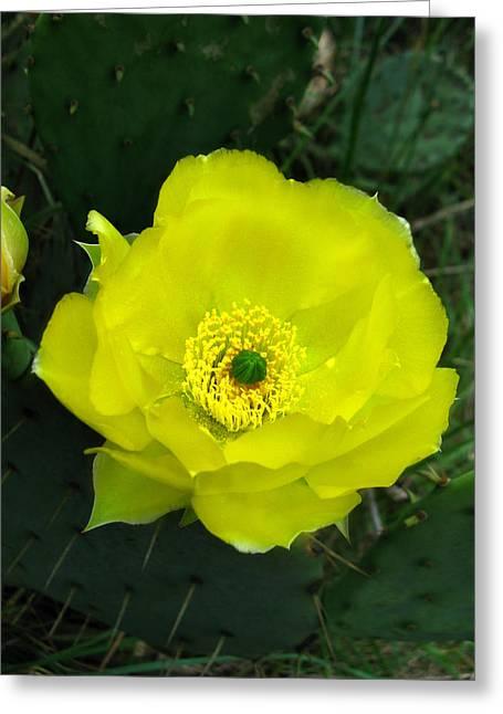 Prickly Pear Cactus Greeting Card