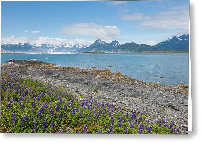 Prince William Sound, Alaska, Lupine Greeting Card