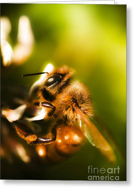 Process Of Pollination Greeting Card