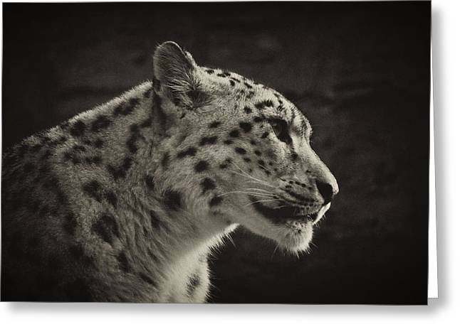 Profile Of A Snow Leopard Greeting Card by Chris Boulton