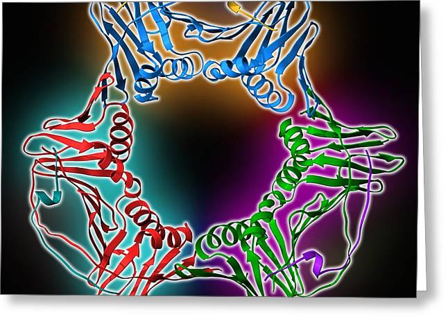 Proliferating Cell Nuclear Antigen Greeting Card by Science Photo Library