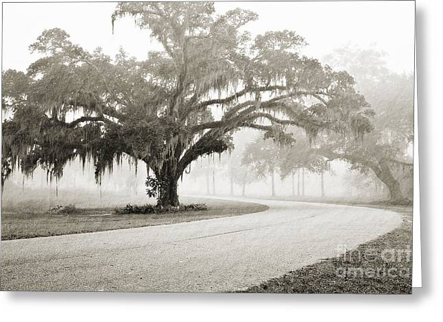 Proud Oak In The Fog Greeting Card by Scott Pellegrin