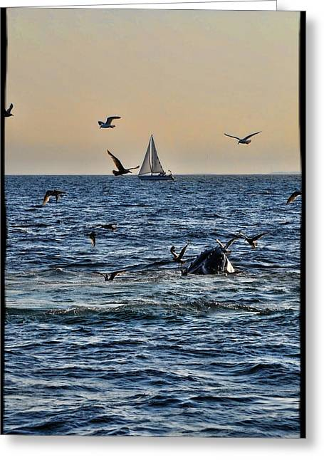 Provincetown Greeting Card