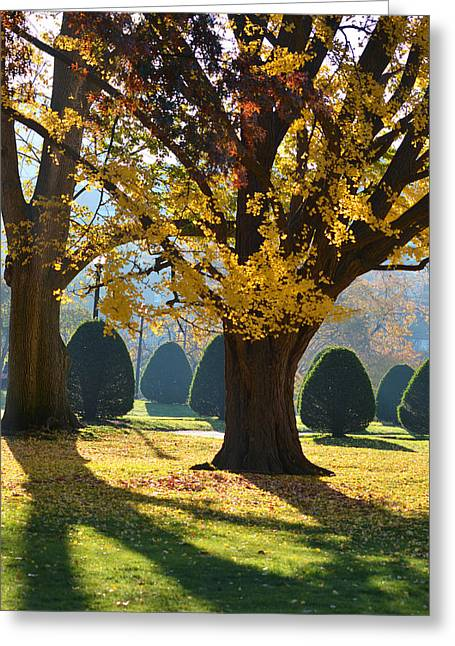 Public Garden Fall Tree Greeting Card
