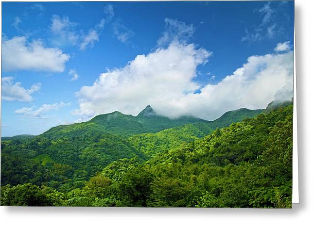 Puerto Rico, Luquillo, El Yunque Greeting Card by Miva Stock