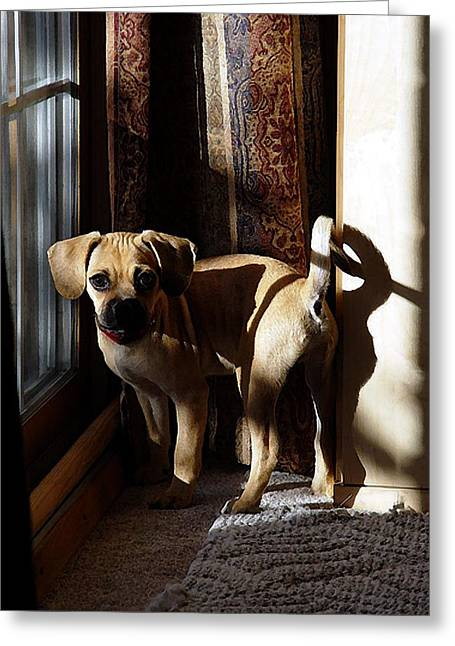 Puggle Dog Portrait Greeting Card by Olde Time  Mercantile