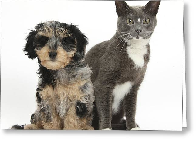 Puppy And Cat Greeting Card by Mark Taylor